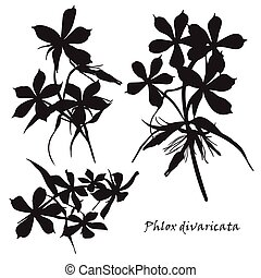 Set of flowers phlox divaricata with leafs. Black silhouette on white background