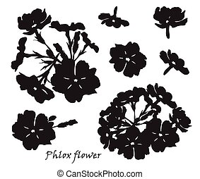 Set of flowers phlox with leafs. Black silhouette on white background