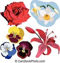 Set of flowers, red rose, narcissus, three pansies, and pink lily
