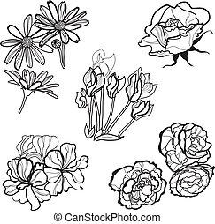 Set of flowers - Set of floral design elements -  flowers