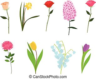 Set of flowers vector isolated