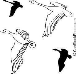 set of flying wild ducks. Vector illustration.