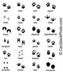 footprints of wild animals