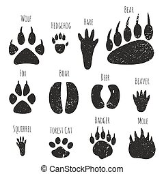 Set of forest animals footprints.