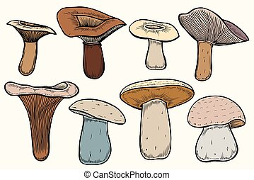 Set of Forest mushrooms - hand drawn vector colorful sketch....