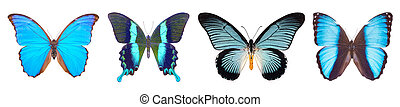 Set of four blue, beautiful butterflies isolated on white.