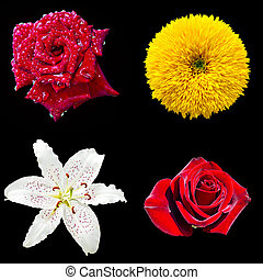 set of four flowers