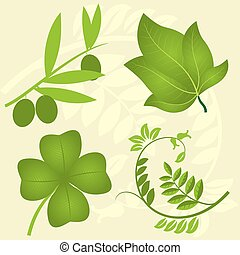 Set of four green branches. Vegetal leaves.