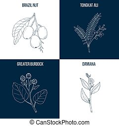 Set of four hand drawn eatable and medicinal plants - Vector...