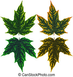 Set of four maple leaves