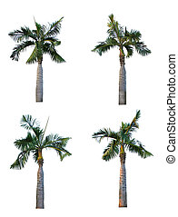 Set of four palm tree isolated on white background