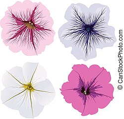 Set of four petunia flowers, white, pink, blue, magenta