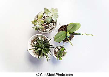 Set of four vases with succulent plants and cactuses on a white table, seen from above, top view