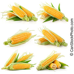 set of fresh corn vegetable with green leaves isolated on white background