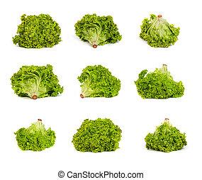 set of Fresh Green Lettuce isolated on white