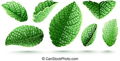 Set of fresh green mint leaves isolated