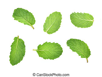 set of fresh mint leaf isolated on white background