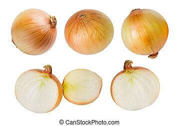 Set of fresh onion isolated on white background