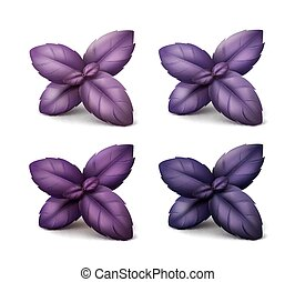 Set of Fresh Red Purple Basil Leaves on Background