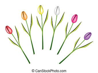 Set of Fresh Tulip Flowers on White Background