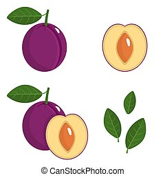 Set of fresh whole, half, cut slice and leaves plum fruit isolated on white background. Summer fruits for healthy lifestyle. Organic fruit. Cartoon style. Vector illustration for any design.