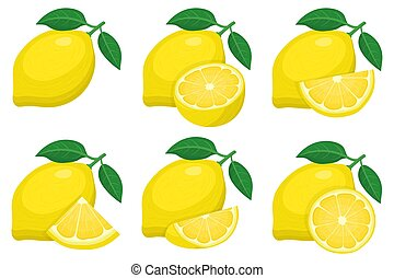 Set of fresh whole, half, cut slice lemon fruit groups isolated on white background. Summer fruits for healthy lifestyle. Organic fruit. Cartoon style. Vector illustration for any design.