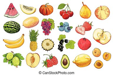 Set of fruits and vegetables in color, isolated on white background. Hand-drawn elements. Vector illustration