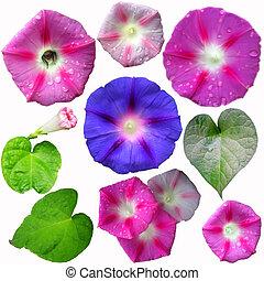 Set of gardening flowers