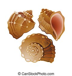 Set of graphic seashells in different angles of view. Vector...