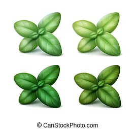 Set of Green Fresh Basil Leaves Isolated