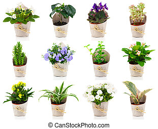 set of green house plant and flower in paper packaging, on white background