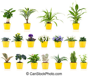 set of green house plant, isolated