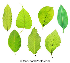 Set of green leaf isolated on white background
