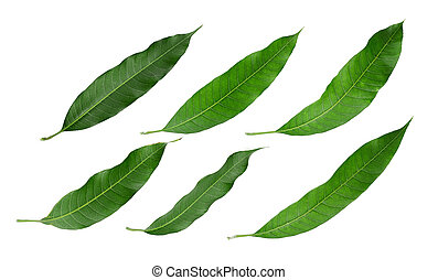 set of green leaf mango isolated on white background