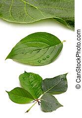 set of green leaf