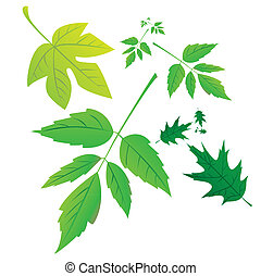 set of green leafs - illustration