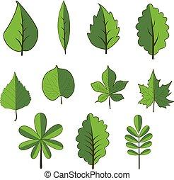 Set of green leaves. Clip art