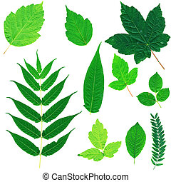 Set of green leaves isolated on white