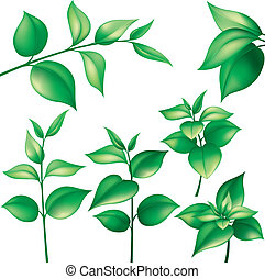 Set of different branches with green leaves, editable vector illustration
