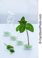 set of green mint leaves