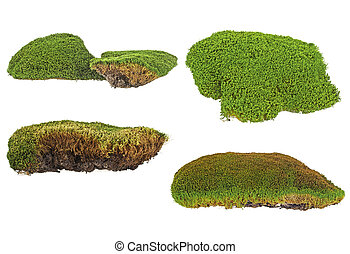 Set of green moss isolated on white background