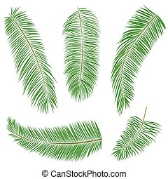 Set of green palm leaves isolated on white, vector