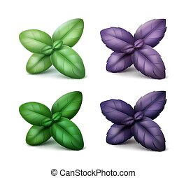 Set of Green Red Purple Basil Leaves on Background