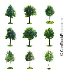 Set of Green Tree Isolated