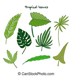 Set of green tropical leaves
