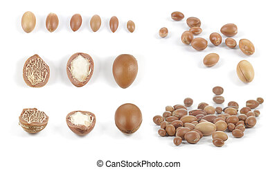 Set of groups of argan nuts on white background.