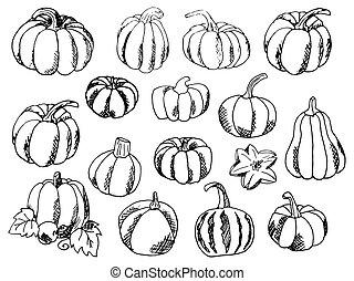 Set of Hand-Draw doodle Pumpkins. Vector illustration.