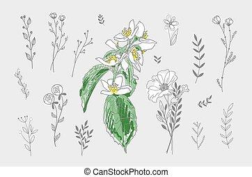 set of hand drawing doodle floral design elements