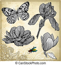 set of hand drawing flower and butterfly