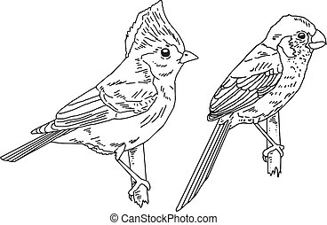 Set of hand drawn birds in black and white, isolated vector illustrations